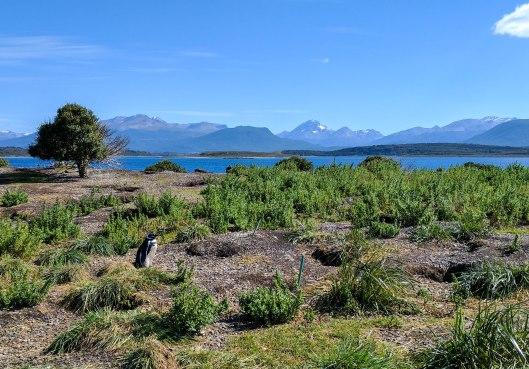 patagoniapenguin