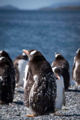 penguinfuzzy