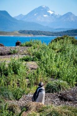 penguinnestmtn